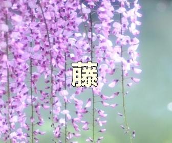 京都・藤の写真スポット