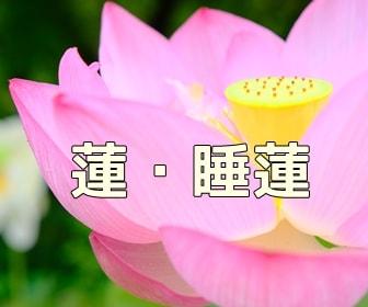 京都・蓮とスイレンの写真スポット