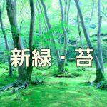 京都 青もみじと苔の撮影スポット