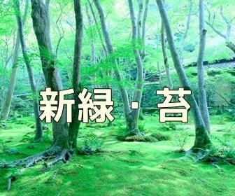 京都・苔と青もみじの写真スポット