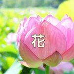 京都のお花の写真スポット