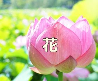 京都 花の撮影スポット