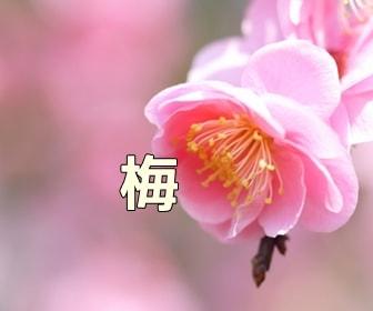 京都・梅の写真スポット