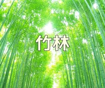 京都らしい風景が撮れる撮影スポット 嵐山の竹林