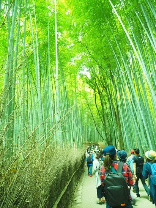 竹林の小径の混雑・撮影におすすめの季節と時間