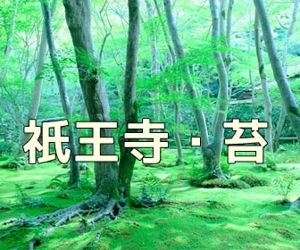 京都・苔と新緑の撮影スポット 祇王寺