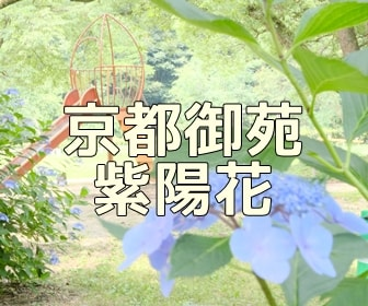 京都・紫陽花の撮影スポット・京都御苑