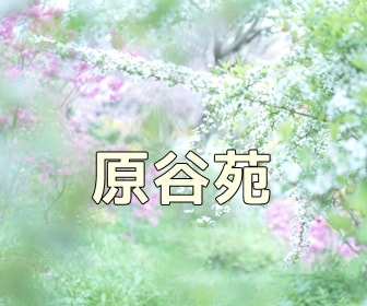 京都のノスタルジックな撮影スポット原谷苑