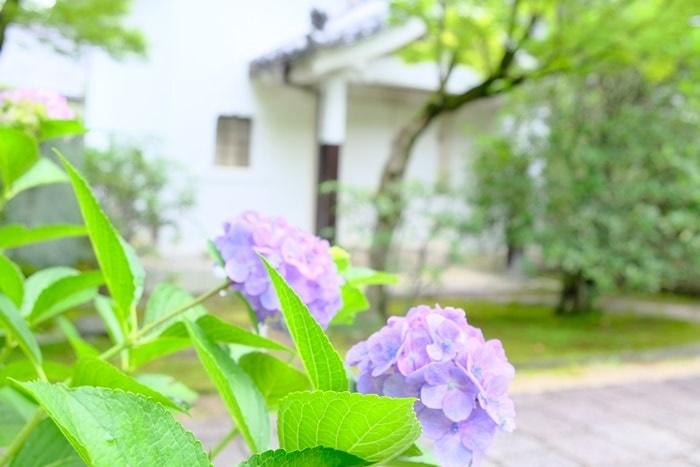 法金剛院の紫陽花の撮影スポット