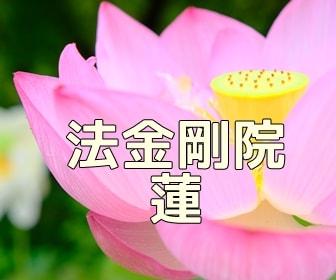 京都・蓮とスイレンの撮影スポット・法金剛院