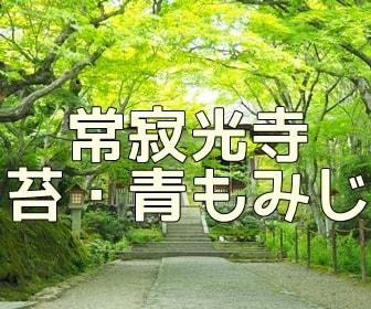京都・青もみじと苔の撮影スポット 常寂光寺