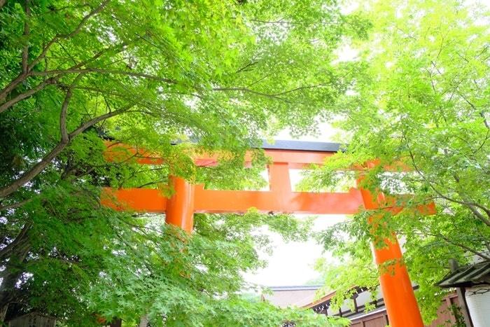 フォトジェニックな下鴨神社写真 若葉と朱色の鳥居