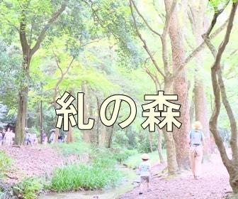 京都のノスタルジックな撮影スポット 糺の森