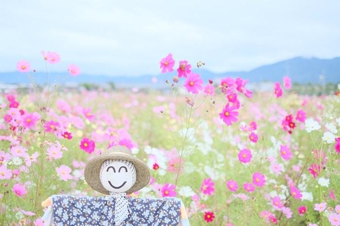 夢コスモス園の撮影スポット