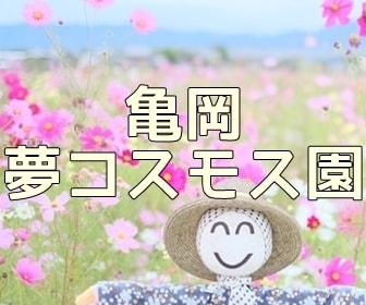 京都・コスモスの撮影スポット 亀岡コスモス園のコスモス