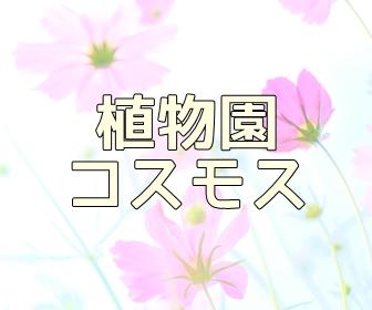 京都・コスモスの撮影スポット・京都府立植物園