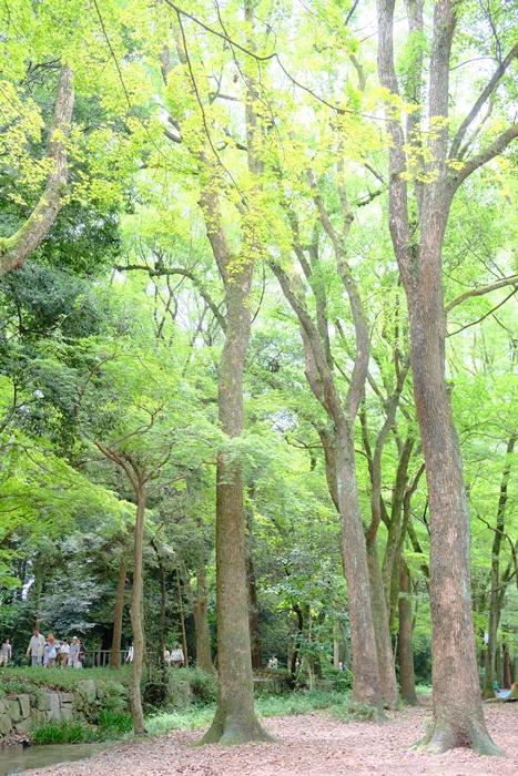 フォトジェニックな糺の森