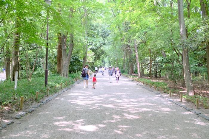 京都ノスタルジックな撮影スポット 糺の森