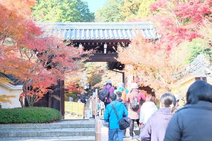 京都紅葉の撮影スポット光明寺の混雑