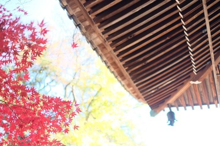 フォトジェニックな光明寺の紅葉