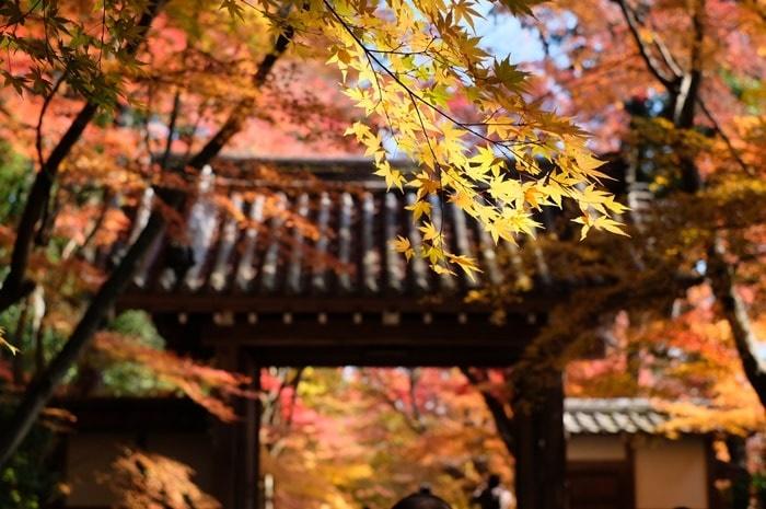 京都の紅葉スポット 光明寺