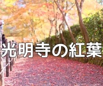 京都・紅葉の撮影スポット光明寺