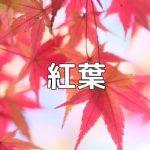 京都紅葉の撮影スポット