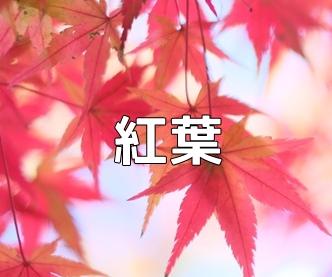 京都・紅葉の写真スポット