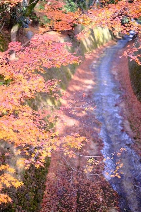 フォトジェニックな北野天満宮の紅葉
