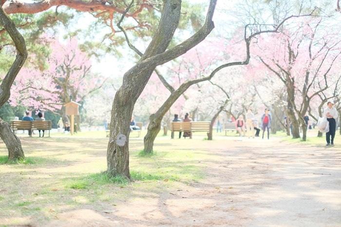 京都御所の梅