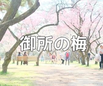 京都・梅の撮影スポット 京都御所