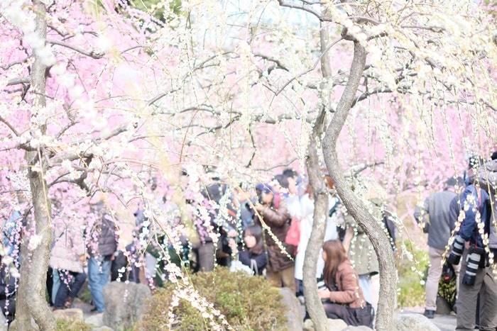 城南宮の梅の見頃と混雑