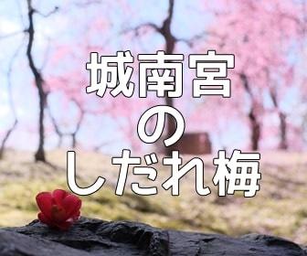 京都・梅の撮影スポット 城南宮の梅