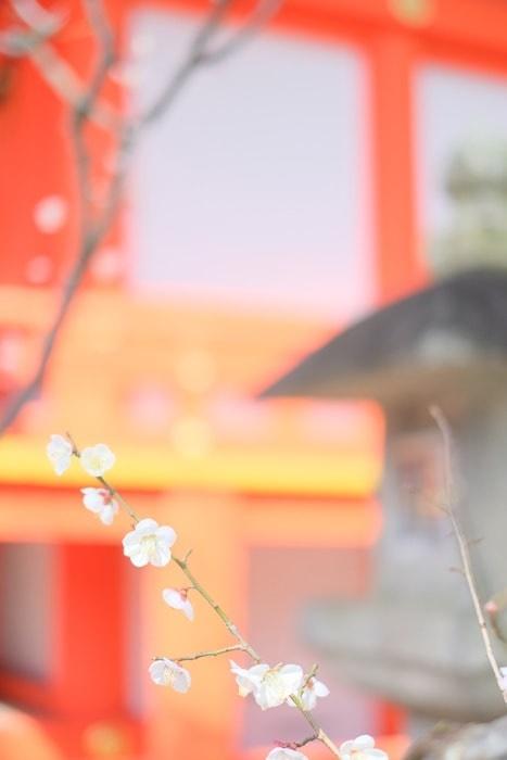 フォトジェニックな北野天満宮の梅