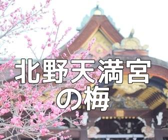 京都・梅の撮影スポット 北野天満宮の梅