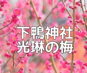 京都・梅の撮影スポット 下鴨神社