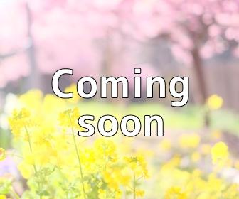京都・菜の花の撮影スポット・亀岡