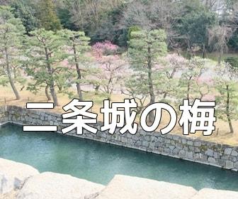京都・梅の撮影スポット・二条城
