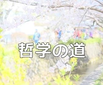 京都のノスタルジックな撮影スポット 哲学の道