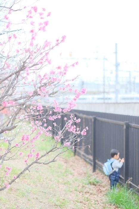 フォトジェニックな梅小路公園の梅