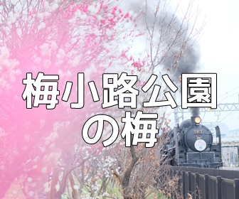 京都・梅の撮影スポット・梅小路公園