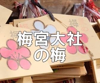 京都・梅の撮影スポット 梅宮大社