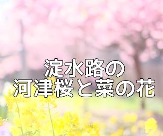 京都・菜の花の撮影スポット・淀水路