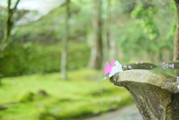 法然院の青もみじと苔の撮影スポット
