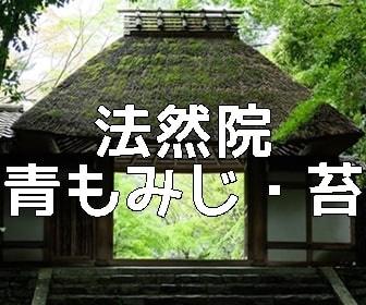 京都・青もみじと苔の撮影スポット法然院