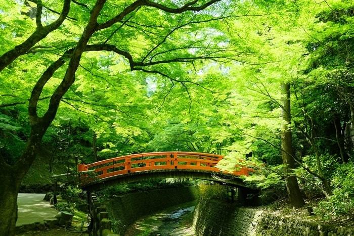 京都・青もみじの撮影スポット・北野天満宮