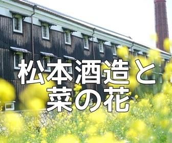 京都・菜の花の撮影スポット・松本酒造