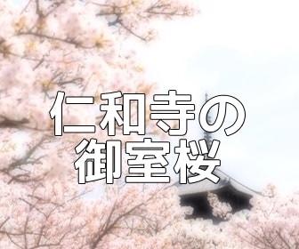 京都・桜の撮影スポット・仁和寺