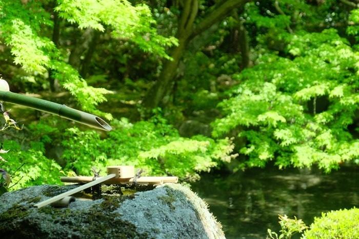 蓮華寺の青もみじ撮影スポット