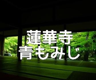 京都・青もみじと苔の撮影スポット蓮華寺